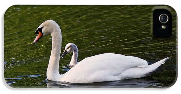 Swan Mother With Cygnet IPhone 5 / 5s Case by Rona Black