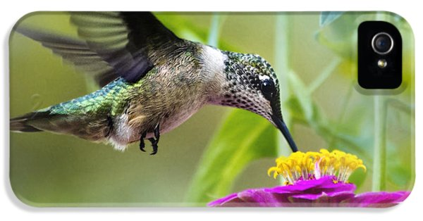 Sweet Success Hummingbird Square IPhone 5 / 5s Case by Christina Rollo