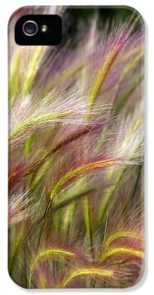 Plant iPhone 5 Cases - Tall Grass iPhone 5 Case by Marty Koch