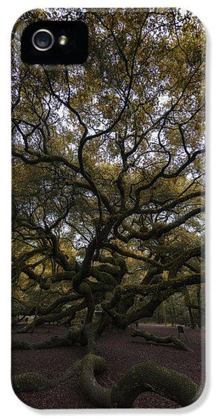 The Angel Oak Tree IPhone 5 / 5s Case by Rick Berk