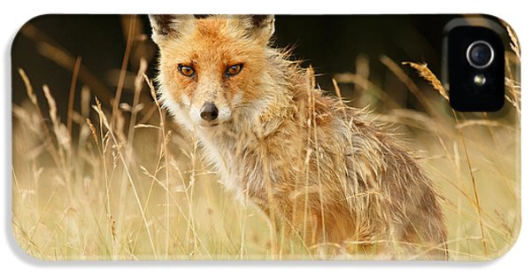 The Catcher In The Grass - Wild Red Fox IPhone 5 / 5s Case by Roeselien Raimond