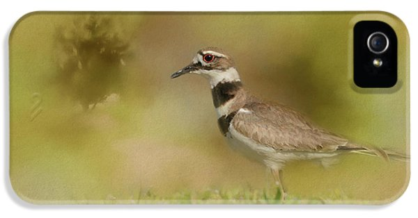 The Elusive Killdeer IPhone 5 / 5s Case by Jai Johnson