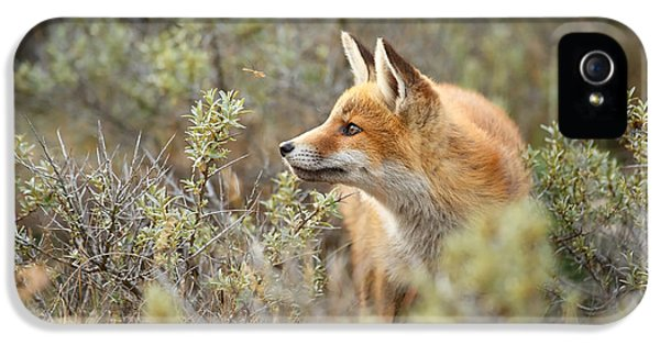 The Fox And Its Prey IPhone 5 / 5s Case by Roeselien Raimond