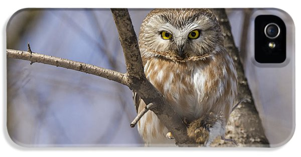 Northern Saw-whet Owl IPhone 5 / 5s Case by Mircea Costina Photography