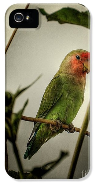 The Lovebird  IPhone 5 / 5s Case by Saija  Lehtonen