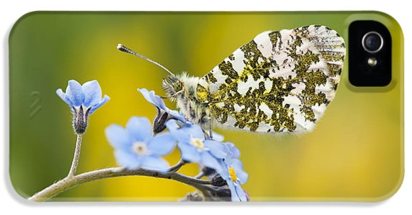 The Orange Tip Butterfly IPhone 5 / 5s Case by Tim Gainey