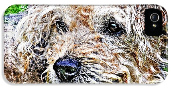 Playful iPhone 5 Cases - The Scruffiest Dog In The World iPhone 5 Case by Meirion Matthias
