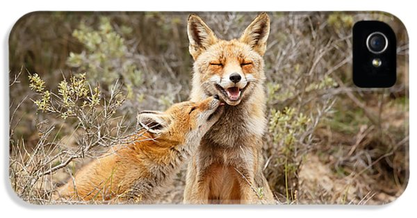 Young Foxes iPhone 5 Cases - The Smiling Vixen and the Happy Kit iPhone 5 Case by Roeselien Raimond