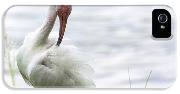 The White Ibis  IPhone 5 / 5s Case by Saija  Lehtonen
