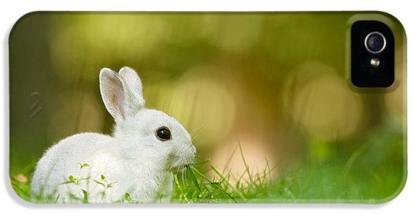 Juvenile iPhone 5 Cases - The White Rabbit iPhone 5 Case by Roeselien Raimond