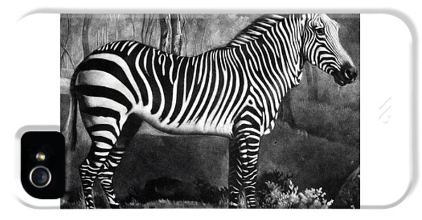 The Zebra IPhone 5 / 5s Case by George Stubbs