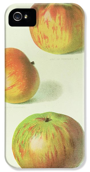 Three Apples IPhone 5 / 5s Case by English School