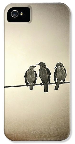 Bob Marley iPhone 5 Cases - Three Little Birds iPhone 5 Case by Trish Mistric
