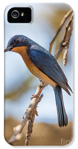 Tickells Blue Flycatcher, India IPhone 5 / 5s Case by B. G. Thomson