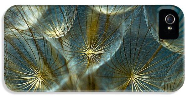 Spiritual iPhone 5 Cases - Translucid Dandelions iPhone 5 Case by Iris Greenwell