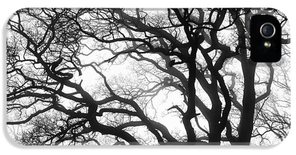 Tree Mist IPhone 5 / 5s Case by Tim Gainey