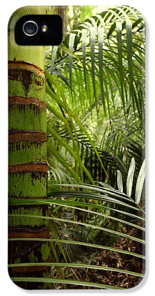Bush iPhone 5 Cases - Tropical forest jungle iPhone 5 Case by Les Cunliffe