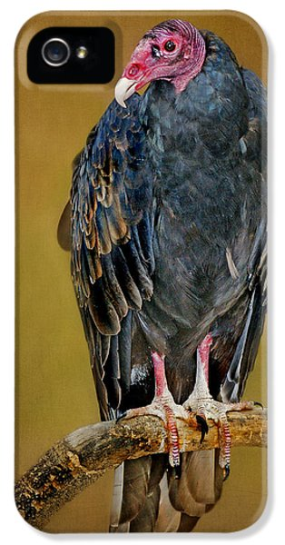 Turkey Vulture IPhone 5 / 5s Case by Nikolyn McDonald