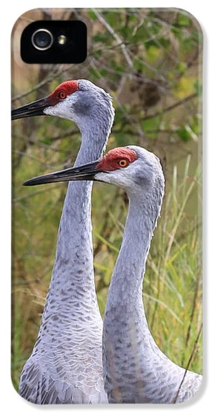 Two Sandhills In Green IPhone 5 / 5s Case by Carol Groenen