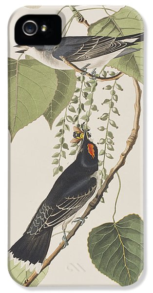 Tyrant Fly Catcher IPhone 5 / 5s Case by John James Audubon