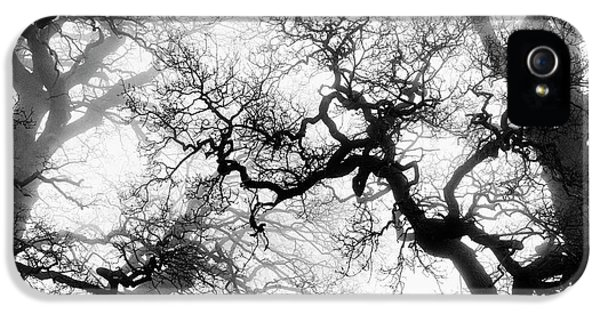 Veiled Tones Of Winter IPhone 5 / 5s Case by Tim Gainey