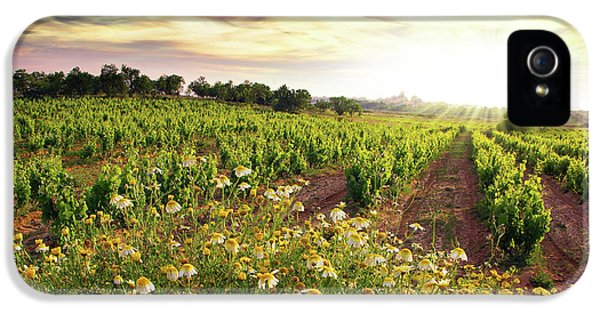 Agriculture iPhone 5 Cases - Vineyard iPhone 5 Case by Carlos Caetano