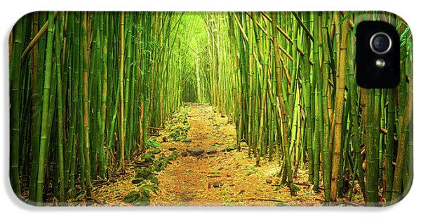Waimoku Bamboo Forest IPhone 5 / 5s Case by Inge Johnsson