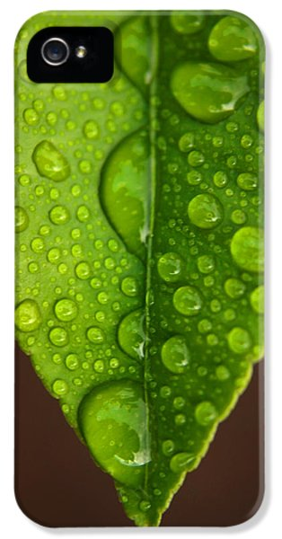 Leaf iPhone 5 Cases - Water Droplets on Lemon Leaf iPhone 5 Case by Ralph A  Ledergerber-Photography