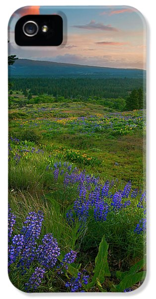 Lupine iPhone 5 Cases - Wenas Valley Sunset iPhone 5 Case by Mike  Dawson