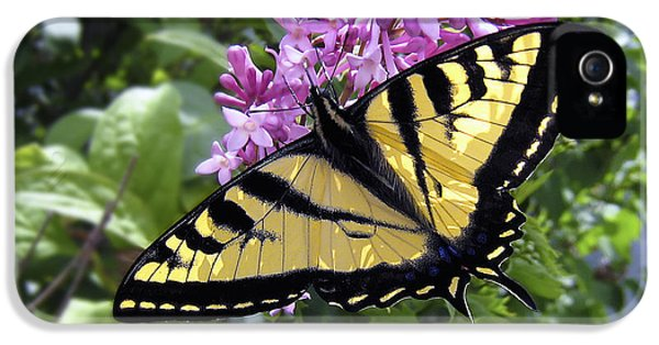 Swallowtail iPhone 5 Cases - Western Tiger Swallowtail Butterfly iPhone 5 Case by Daniel Hagerman