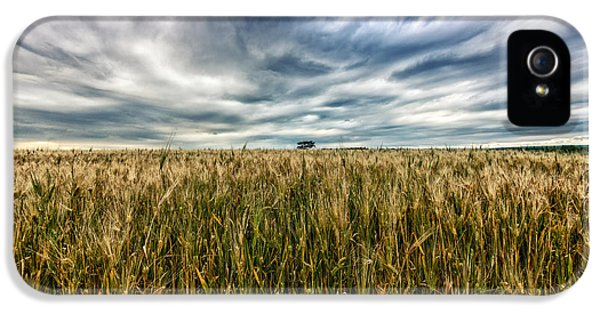 Agricultural iPhone 5 Cases - Wheat Field iPhone 5 Case by Stylianos Kleanthous