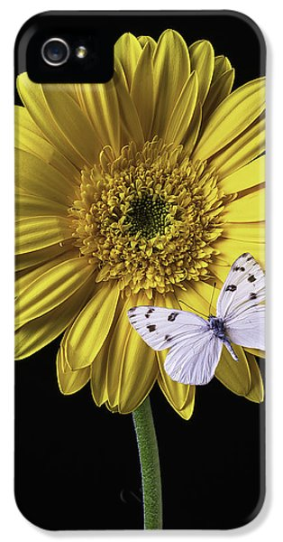 Softly iPhone 5 Cases - White Butterfly On Yellow Daisy iPhone 5 Case by Garry Gay