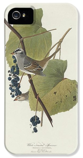 White-crowned Sparrow IPhone 5 / 5s Case by John James Audubon