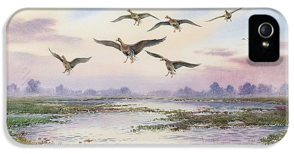White-fronted Geese Alighting IPhone 5 / 5s Case by Carl Donner