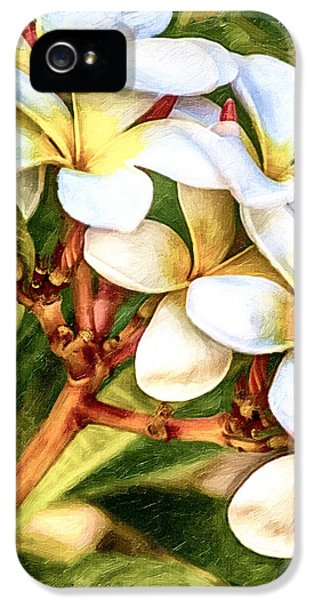 Yellow And White Plumeria Flower Frangipani iPhone 5 Cases - White Gold iPhone 5 Case by David Millenheft