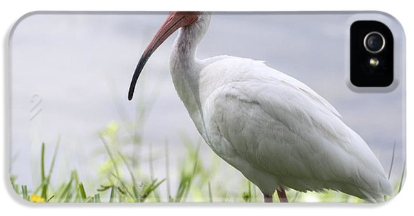 White Ibis  IPhone 5 / 5s Case by Saija  Lehtonen
