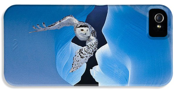 Northern Owl iPhone 5 Cases - White Owl iPhone 5 Case by Jack Zulli