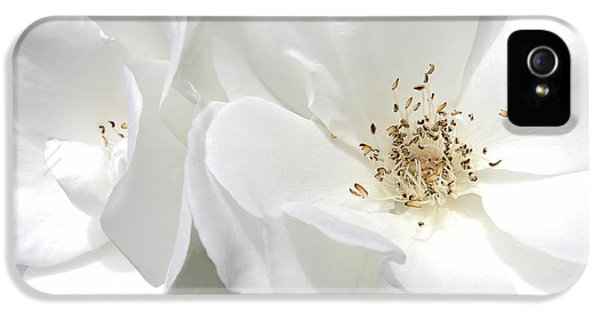 Ivory Rose iPhone 5 Cases - White Roses Macro iPhone 5 Case by Jennie Marie Schell