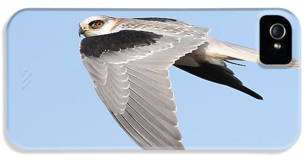 Hawk iPhone 5 Cases - White-Tailed Kite Hawk In Flight . 7D11110 iPhone 5 Case by Wingsdomain Art and Photography