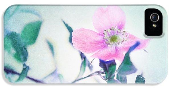 Prickly Wild Rose iPhone 5 Cases - Wild Beauty iPhone 5 Case by Priska Wettstein