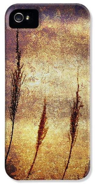 Gold iPhone 5 Cases - Winter Gold iPhone 5 Case by Skip Nall