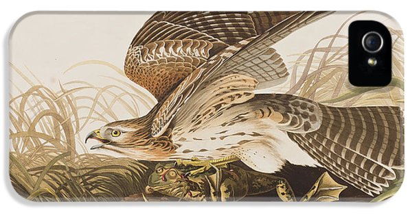 Winter Hawk IPhone 5 / 5s Case by John James Audubon
