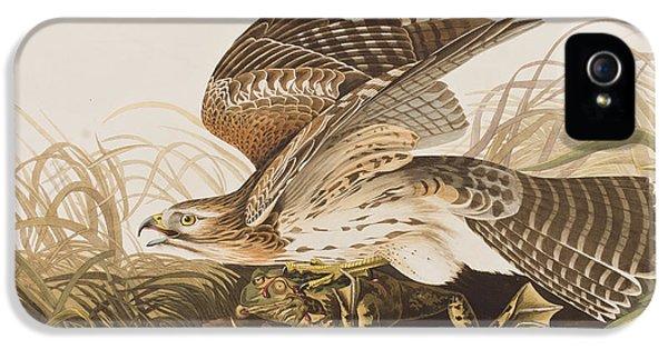 Hawk iPhone 5 Cases - Winter Hawk iPhone 5 Case by John James Audubon