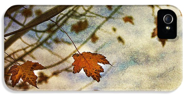 Leaf iPhone 5 Cases - Winter On The Way iPhone 5 Case by Rebecca Cozart