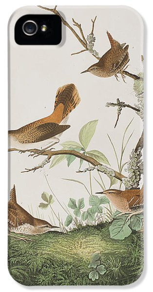 Winter Wren Or Rock Wren IPhone 5 / 5s Case by John James Audubon