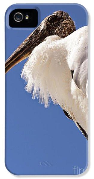 Wonderful Wood Stork IPhone 5 / 5s Case by Carol Groenen