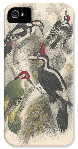 Woodpeckers IPhone 5 / 5s Case by Oliver Goldsmith