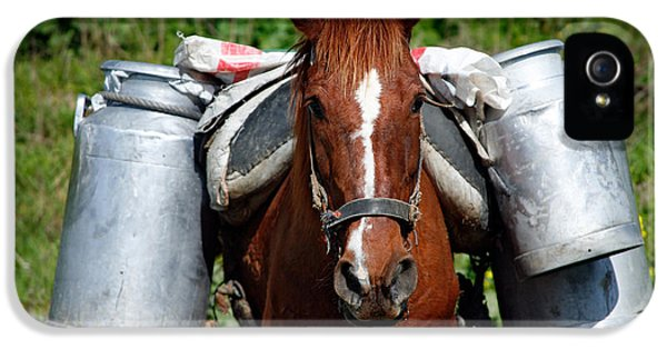 Horse iPhone 5 Cases - Work horse at the Azores iPhone 5 Case by Gaspar Avila
