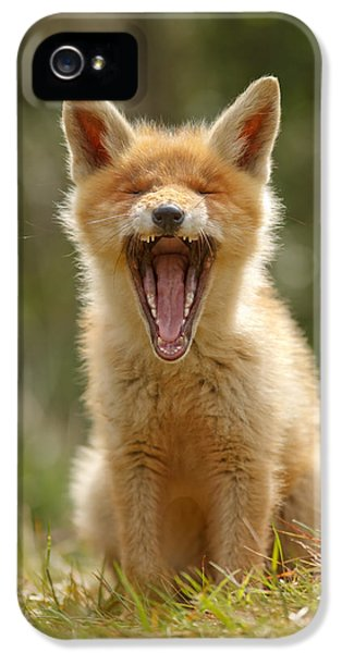 Young Foxes iPhone 5 Cases - Yawning Fox Kit iPhone 5 Case by Roeselien Raimond