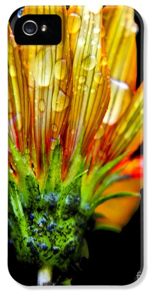 Yellow And Orange Wet Zinnias. IPhone 5 / 5s Case by Elizabeth Greene
